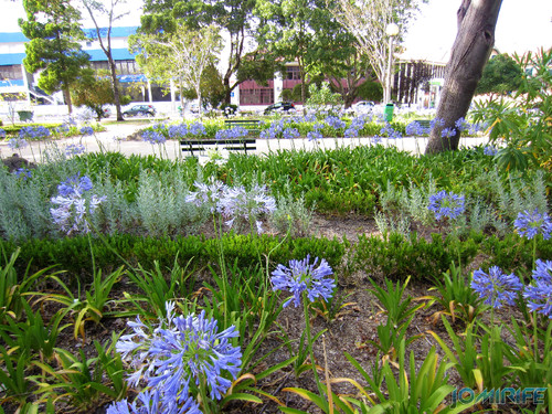 Jardim da Marinha Grande (9) Flores [en] Garden of Marinha Grande in Portugal - Flowers
