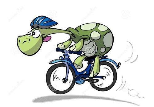tartaruga-da-bicicleta-8282067.jpg