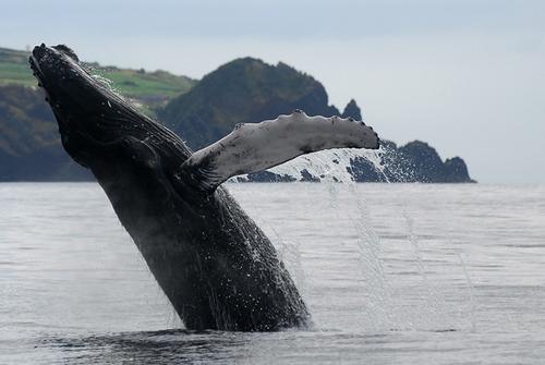 baleias_acores_2_r1_c1.png