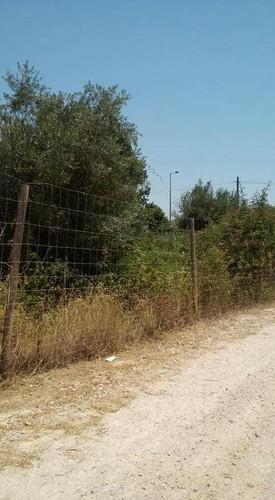 matagal 2.jpg