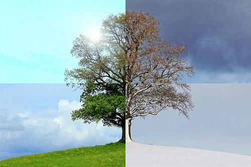 seasons-of-the-year-1127760_960_720.jpg