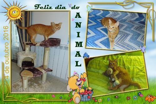 animaldia4outubro.jpg