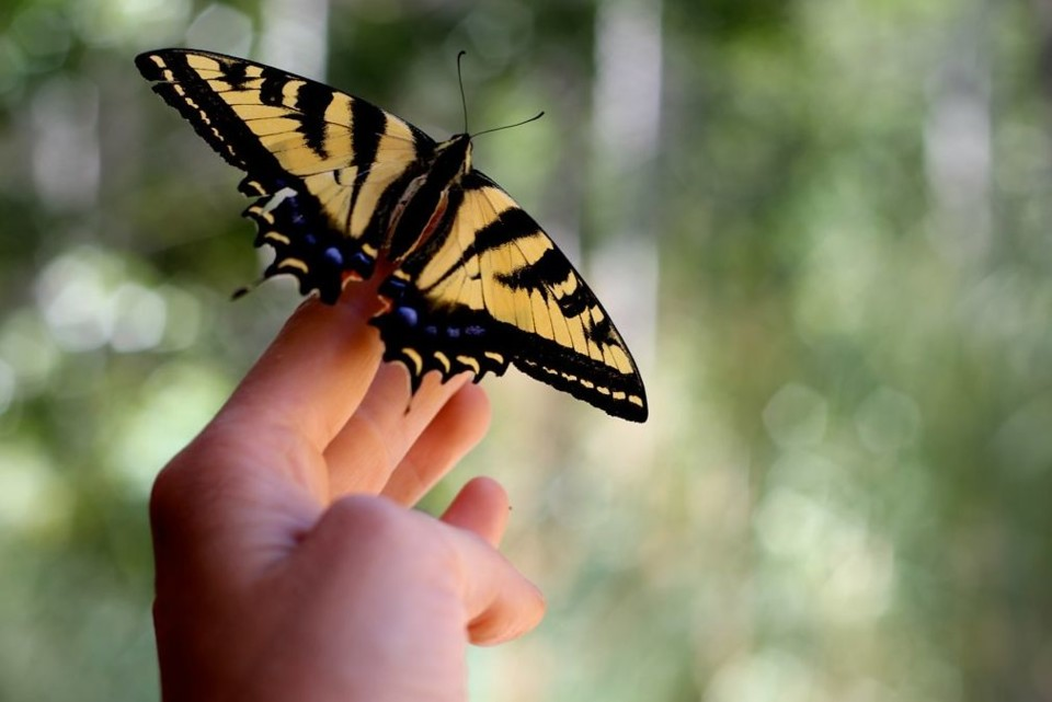 borboleta.jpg