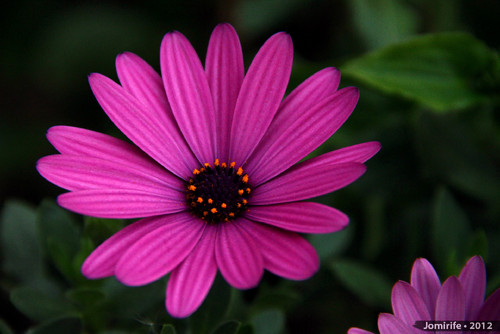Flor violeta / Violet flower