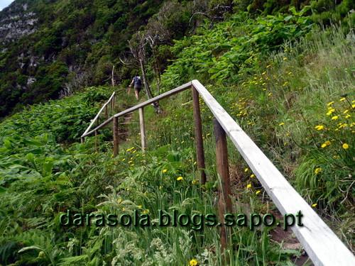 Azores_flores_faja_grande_21.JPG
