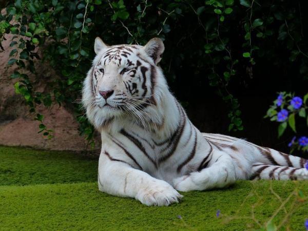 img_os_10_animais_mais_bonitos_do_mundo_21154_paso