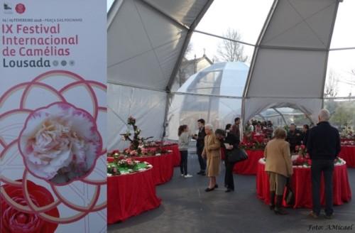 1 - IX Exposição Camélias - Lousada Fev 2018 -