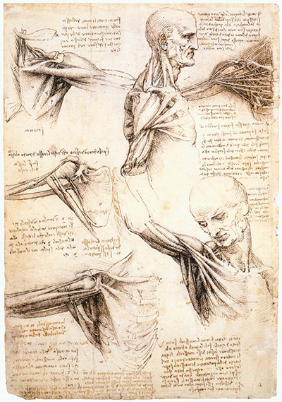 Anatomical Studies of the Shoulder Leonardo da Vin