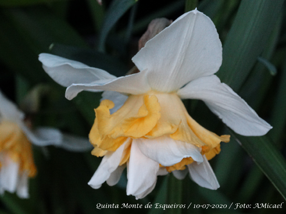 6 Narciso - DSC06111.png