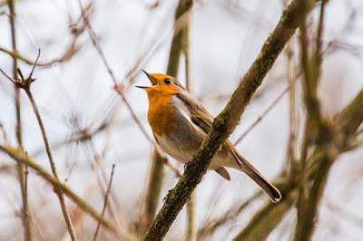 bird-2119874_640.jpg