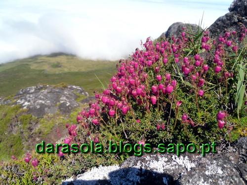 azores_pico_subida_14.JPG