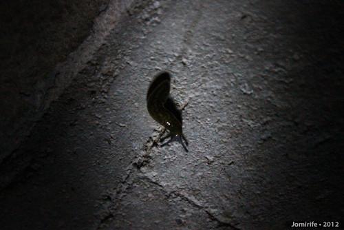 Lesma / Slug (43)