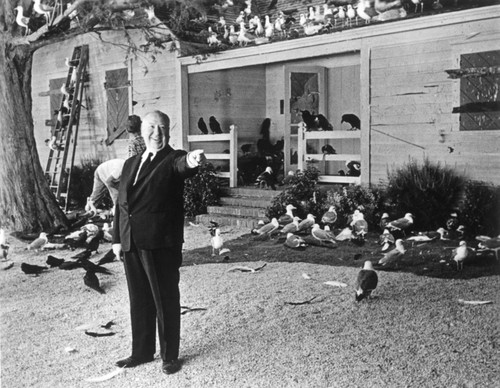 Birds, 1963