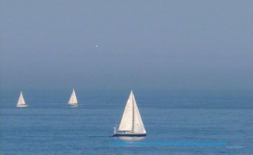barcos à vela1mcafe.png