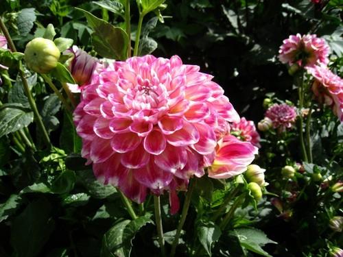uma flor delicada