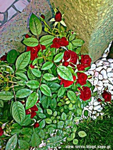 Rosas, imagem meramente ilustrativa