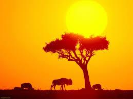 africa0.jpg