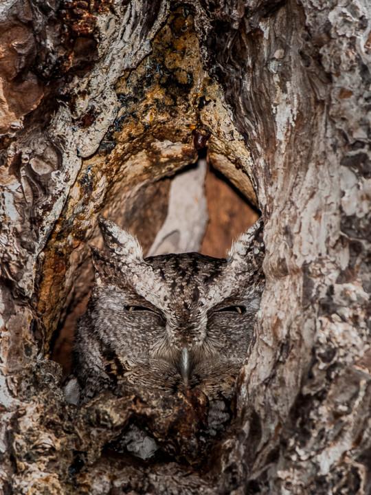 Escondo-me no que mostro II.jpg