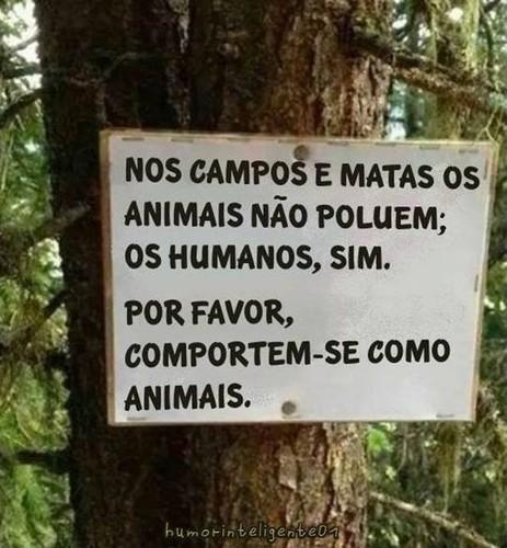 animais2.jpg
