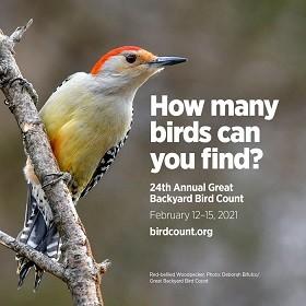 gbbc-2021-woodpecker-700.jpg