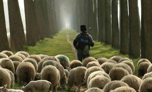 pastor-ovelhas-2.jpg