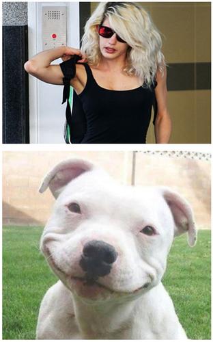 pitbull.png