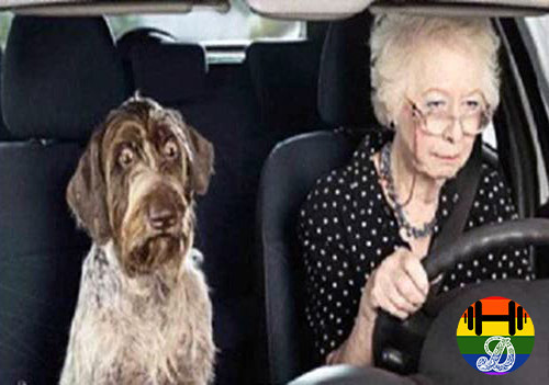 old-lady-driving.jpg