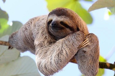 international-sloth-day.jpg