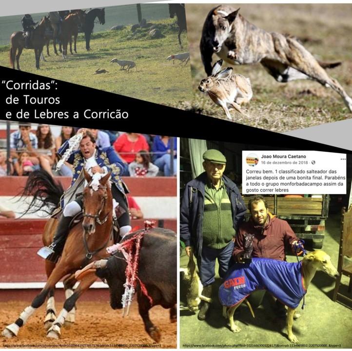CORRIDAS DE DOIDOS.jpg