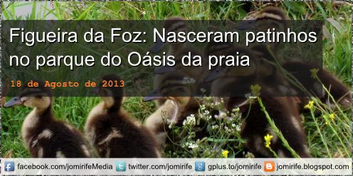 Blog Post: Figueira da Foz: Nasceram patinhos no parque do Oásis da praia [en] Nw born ducklings in Park Oasis Beach in Figueira da Foz, Portugal