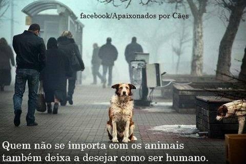 animais3.jpg