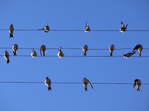Pássaros, encontro, reunião