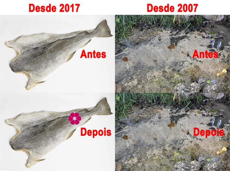 Jardim Bacalhau vs Esgotos.jpg