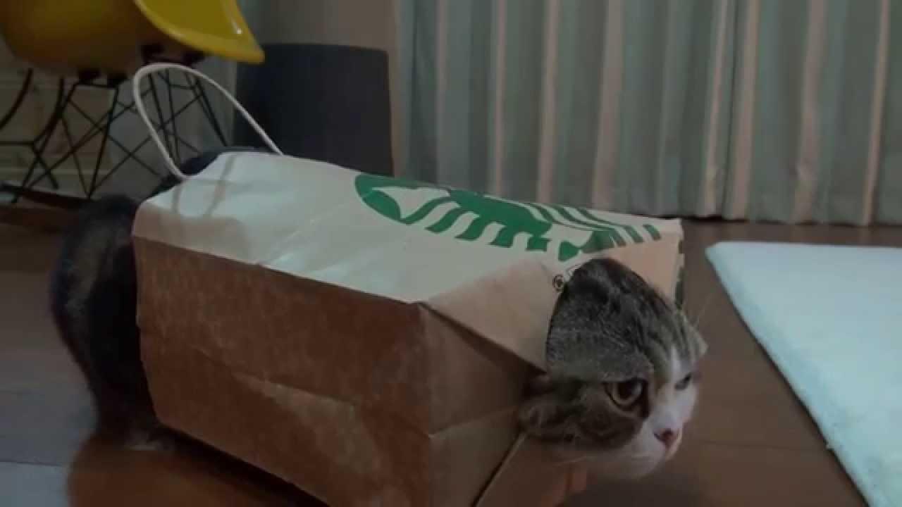 gato em saco de papel