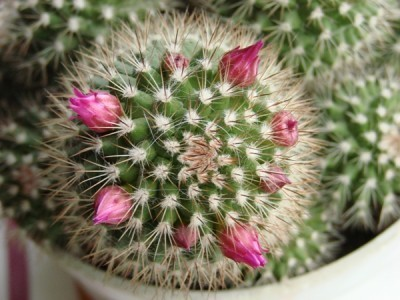 Alguns abrirão em flor.jpg