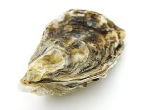 oyster_shell-300x228.jpg