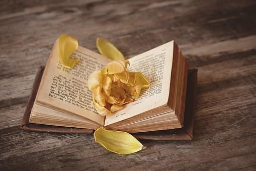 Petelas amarelas-1291164__340.jpg