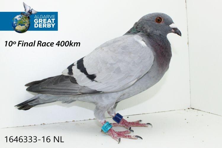 NL-1646333.jpg