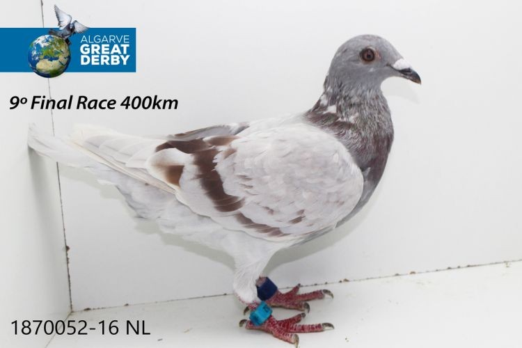 NL-1870052.jpg