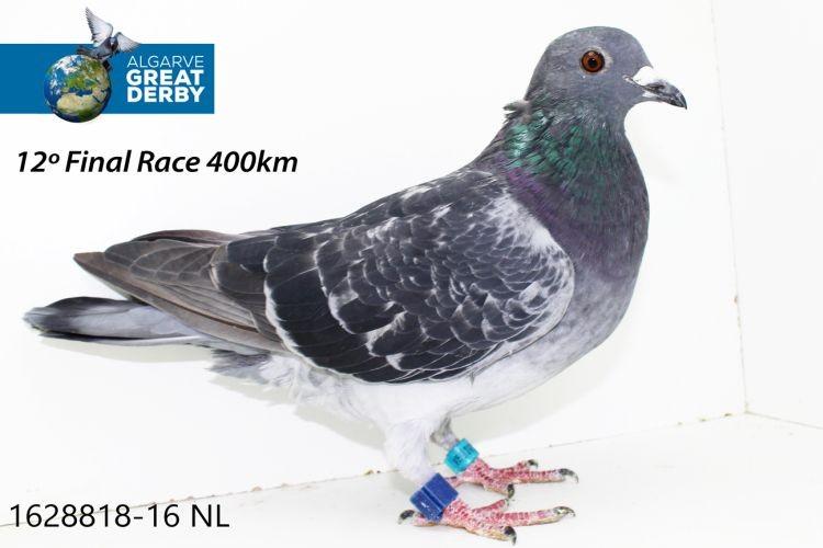 NL-1628818.jpg