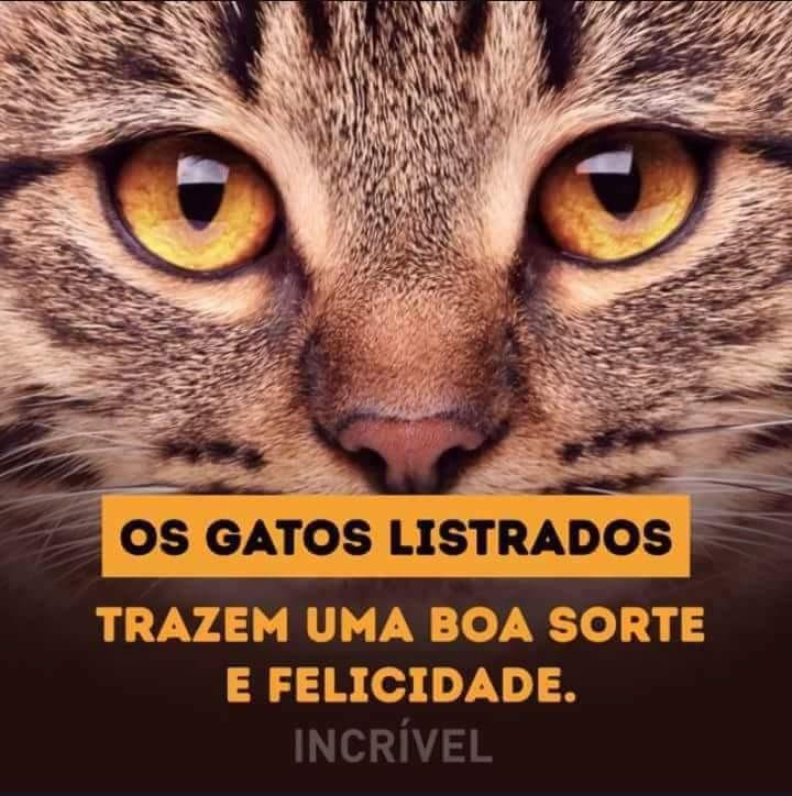 FB_IMG_1494613100322.jpg