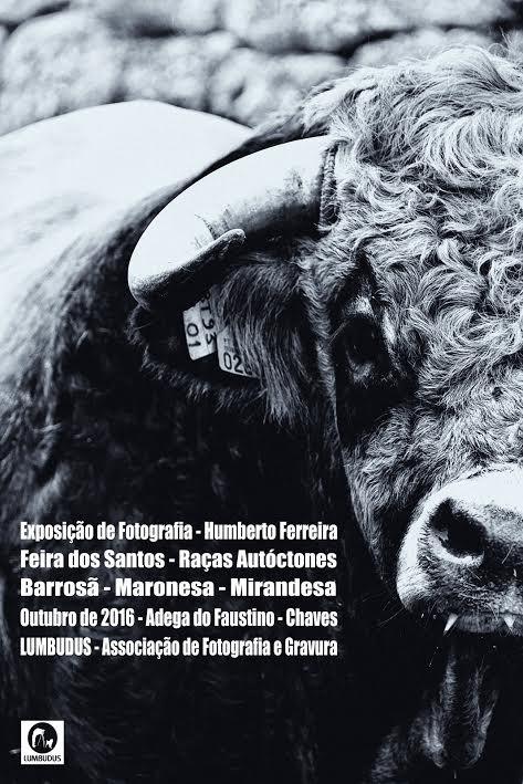 Feira Santos.jpg