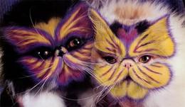 Por-que-pintar-gatos-3.jpg