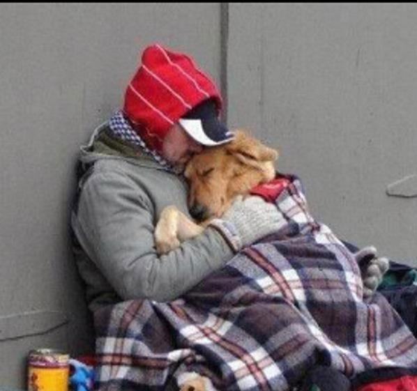 cão sem abrigo