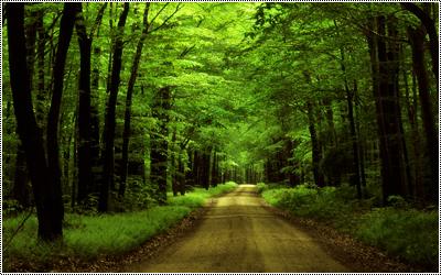 Floresta - Página 3 17348095_EvZiQ